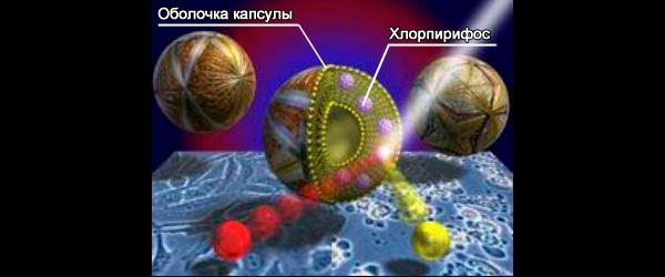 микрокапсула средства гет в разрезе