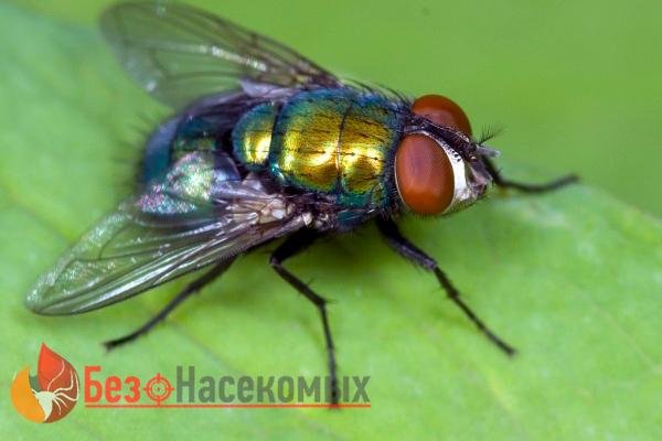 факты о мухах